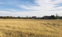 Teren intravilan 4300 m² - oras Costesti